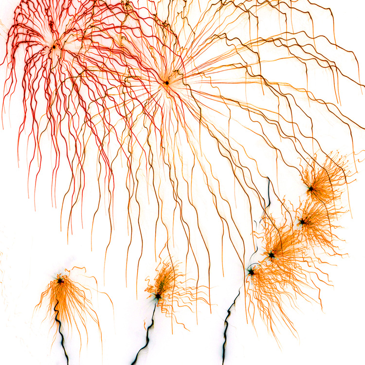 Fireworks 2 by Richard Bown