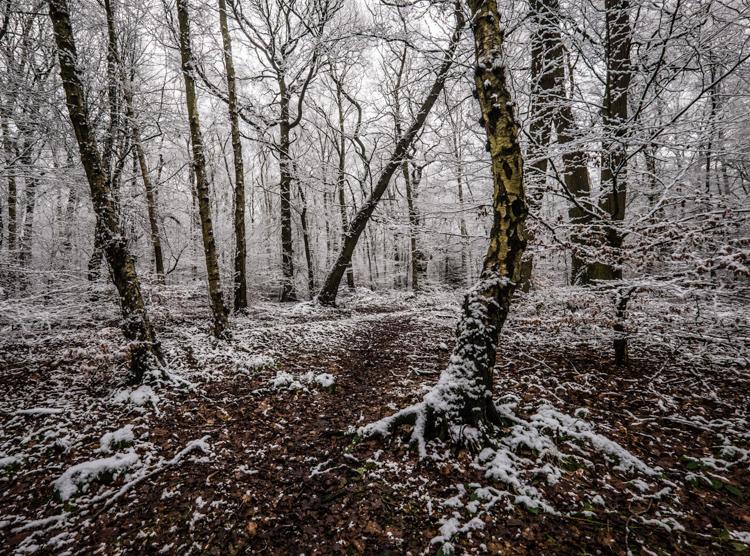 Winter, Hookstone Woods