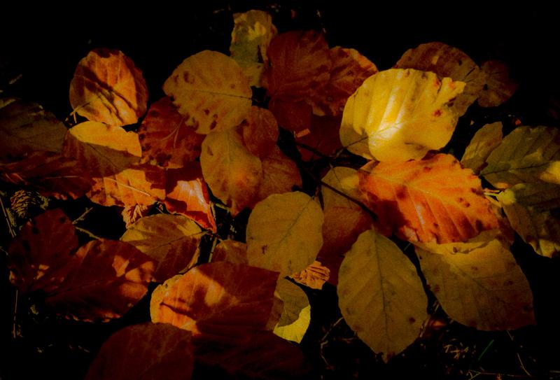Artistic Autumn