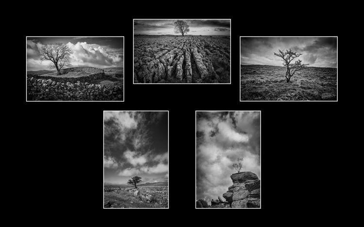 Lonely Trees of the Yorkshire Dales by Simon Hill