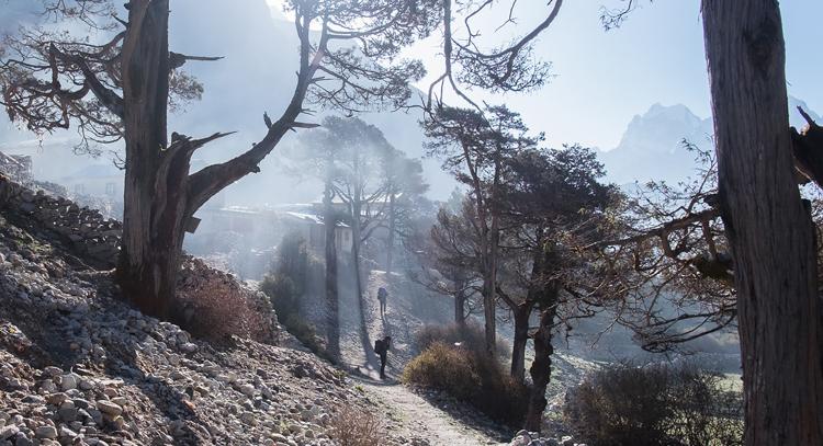 Early Morning Smoke! by Ian Beck