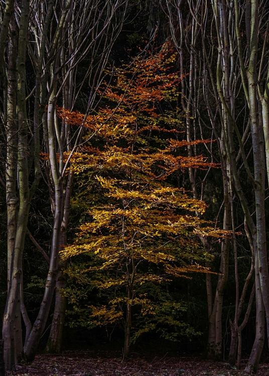 Autumn Glory by Martin Meechan