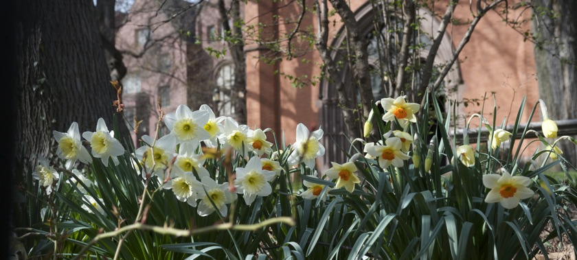 PageLines- Daffs-wide.jpg
