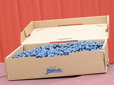 fresh-local-blueberries.jpg