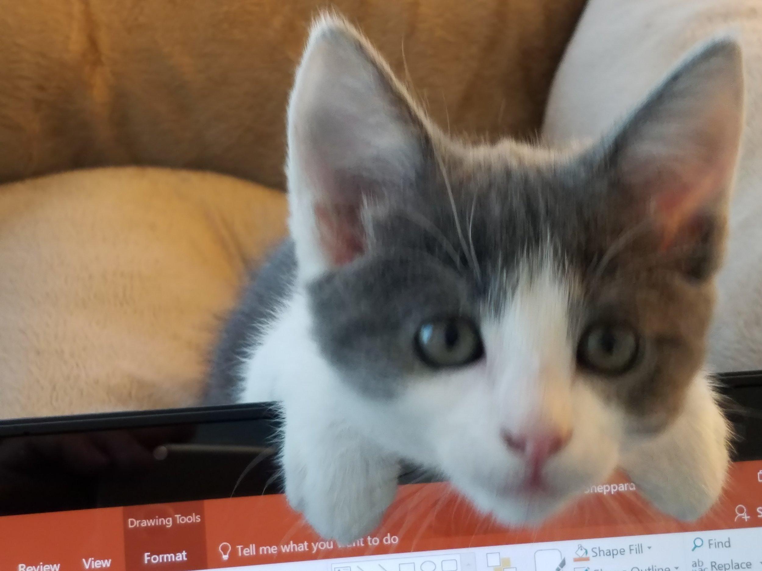 Lulu The Helper.jpg