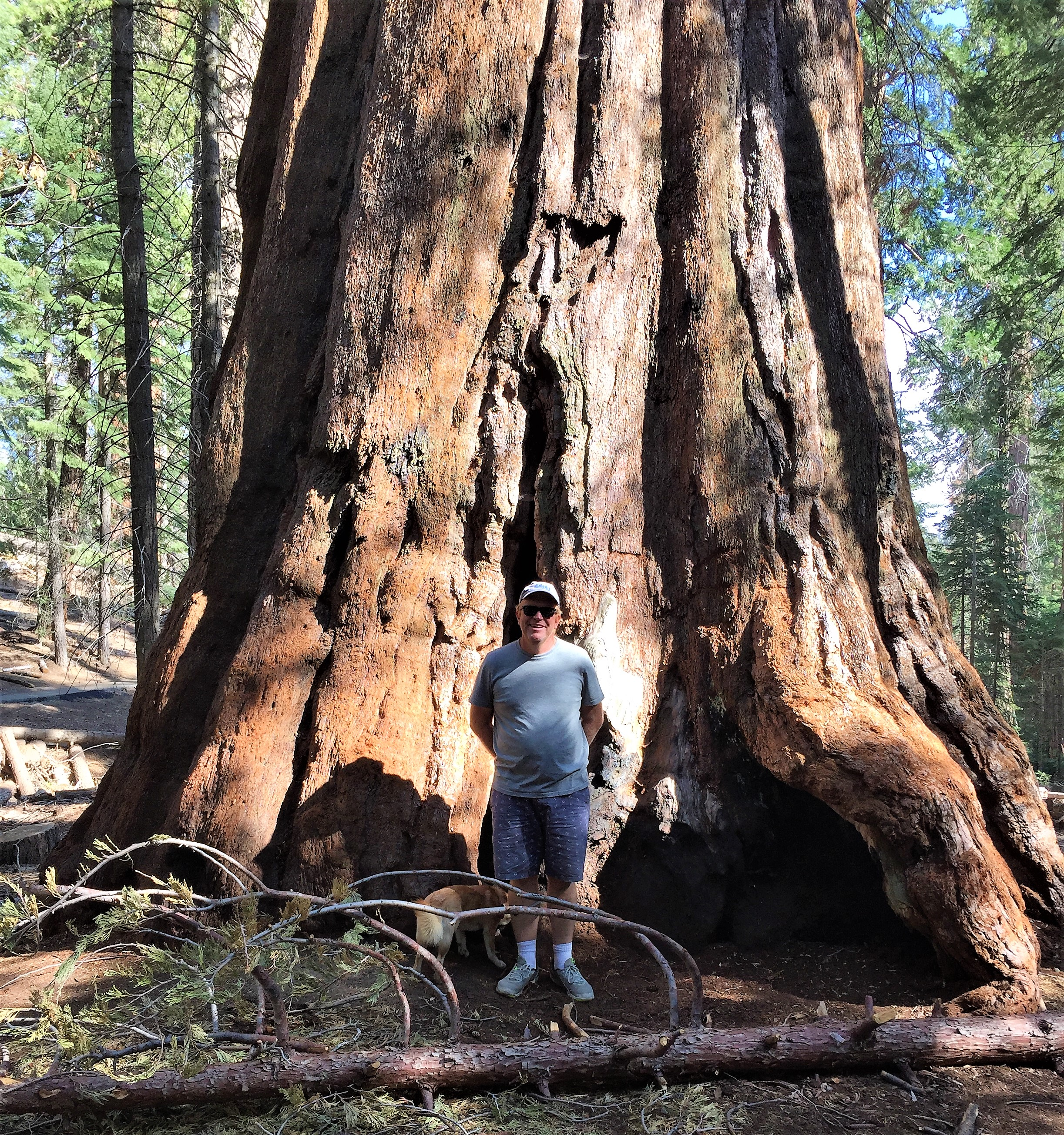 Trail of Giants, Sequoia National Forest