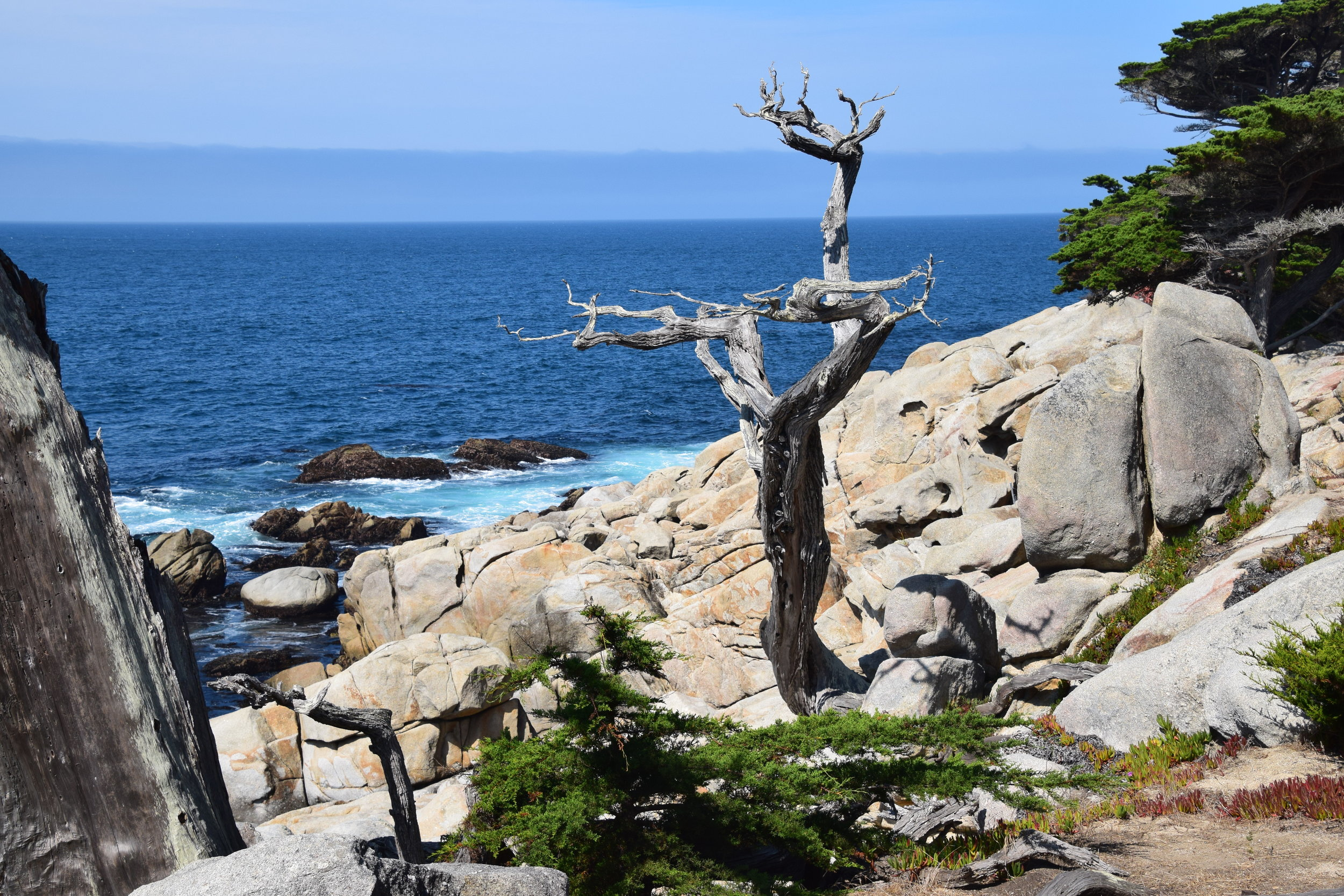 17 Mile Drive, Ghost Tree