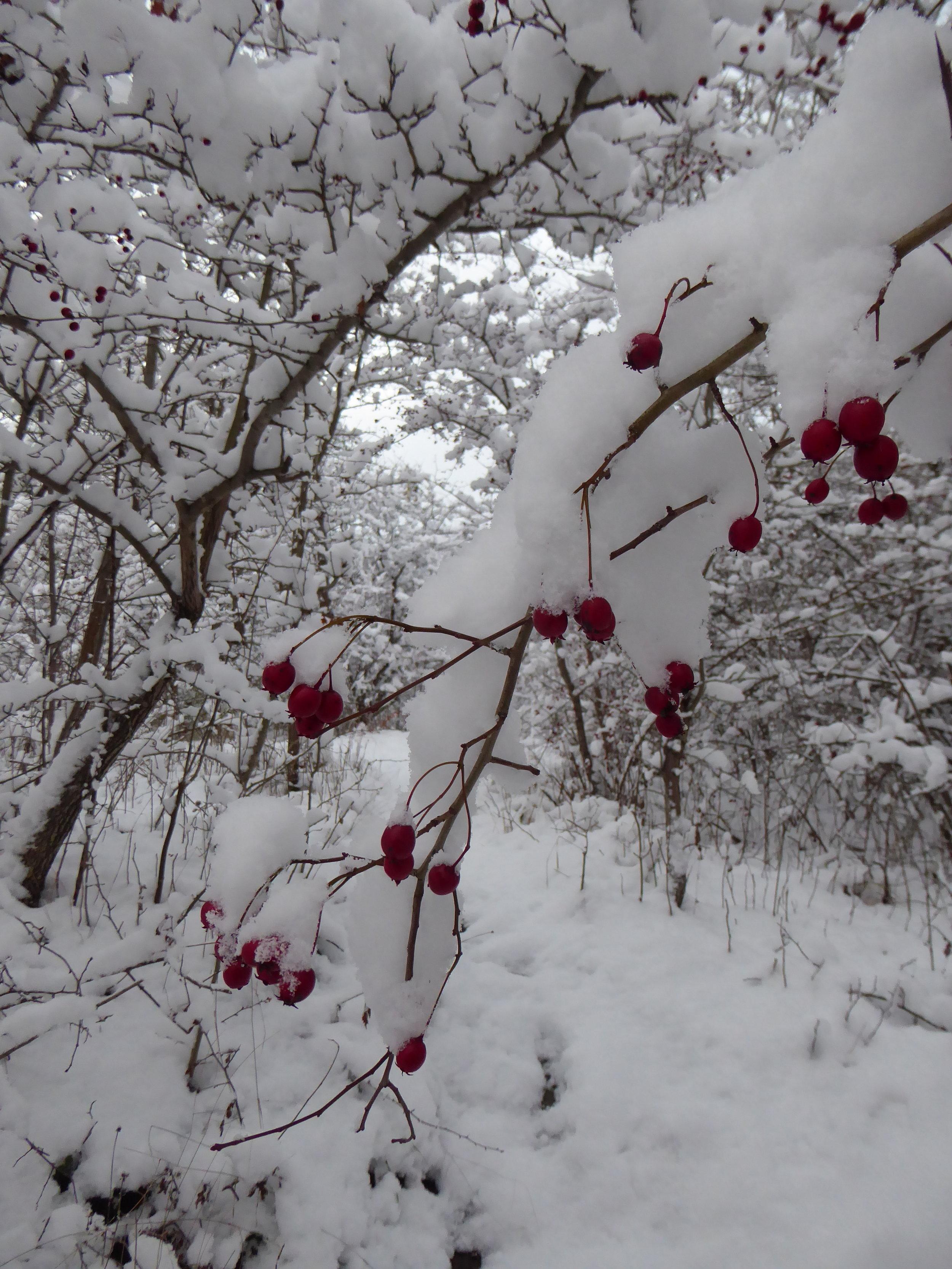 vinterlandskap Stockholm.JPG