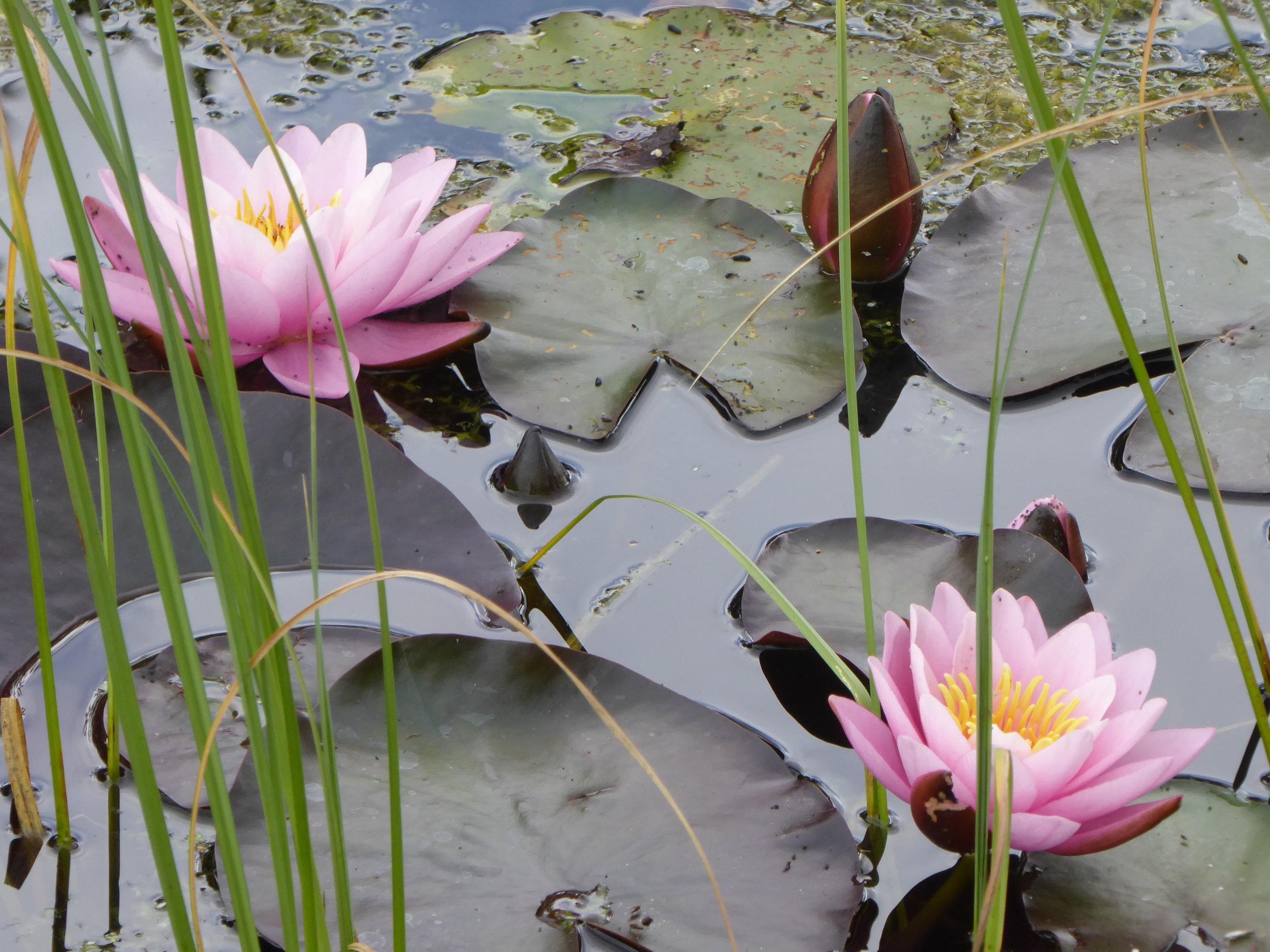 Mindfulness och meditation på Djurgården