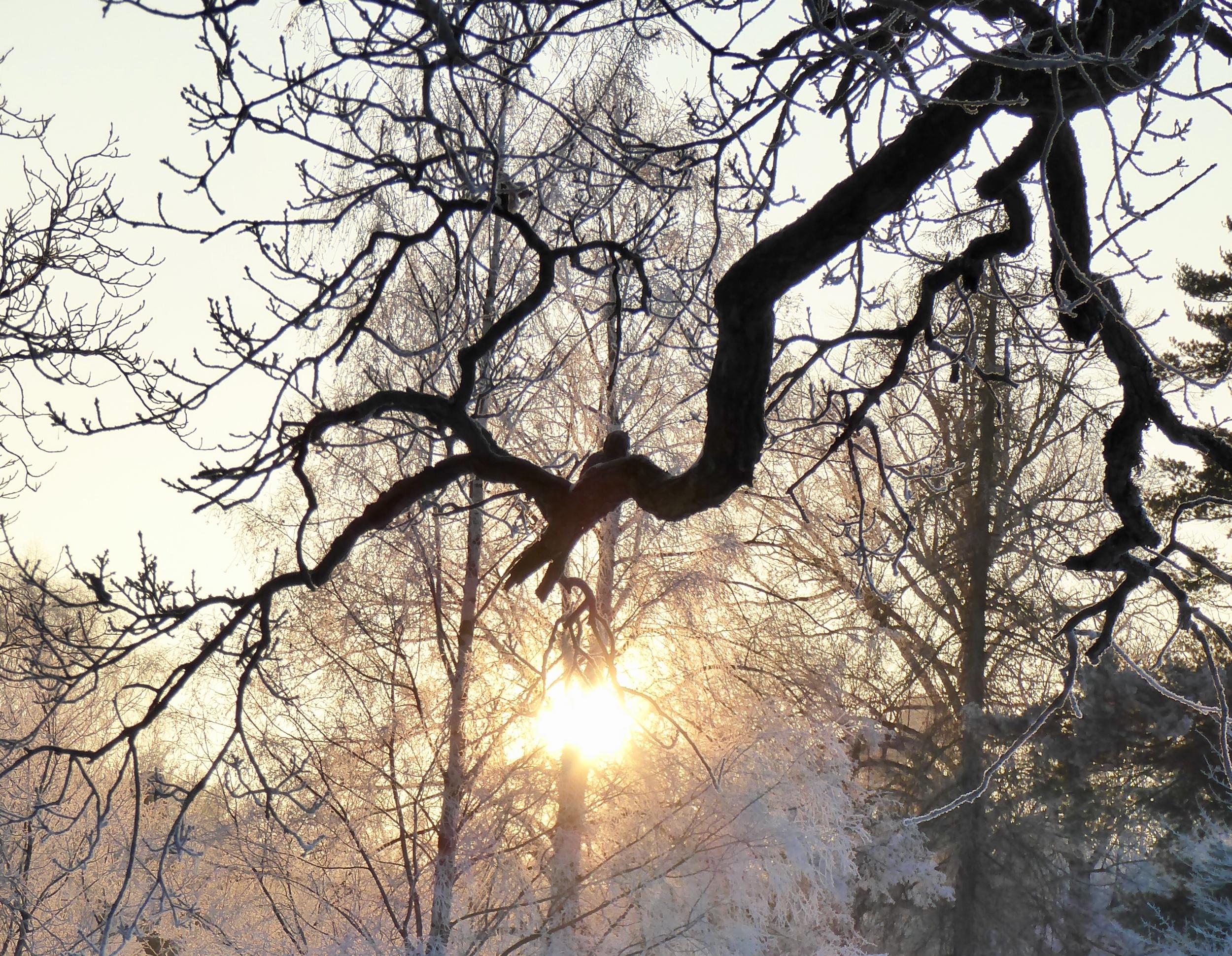 Vinter på Djurgården. Foto Jenny Rosen, Djurgårdens Ekolyx