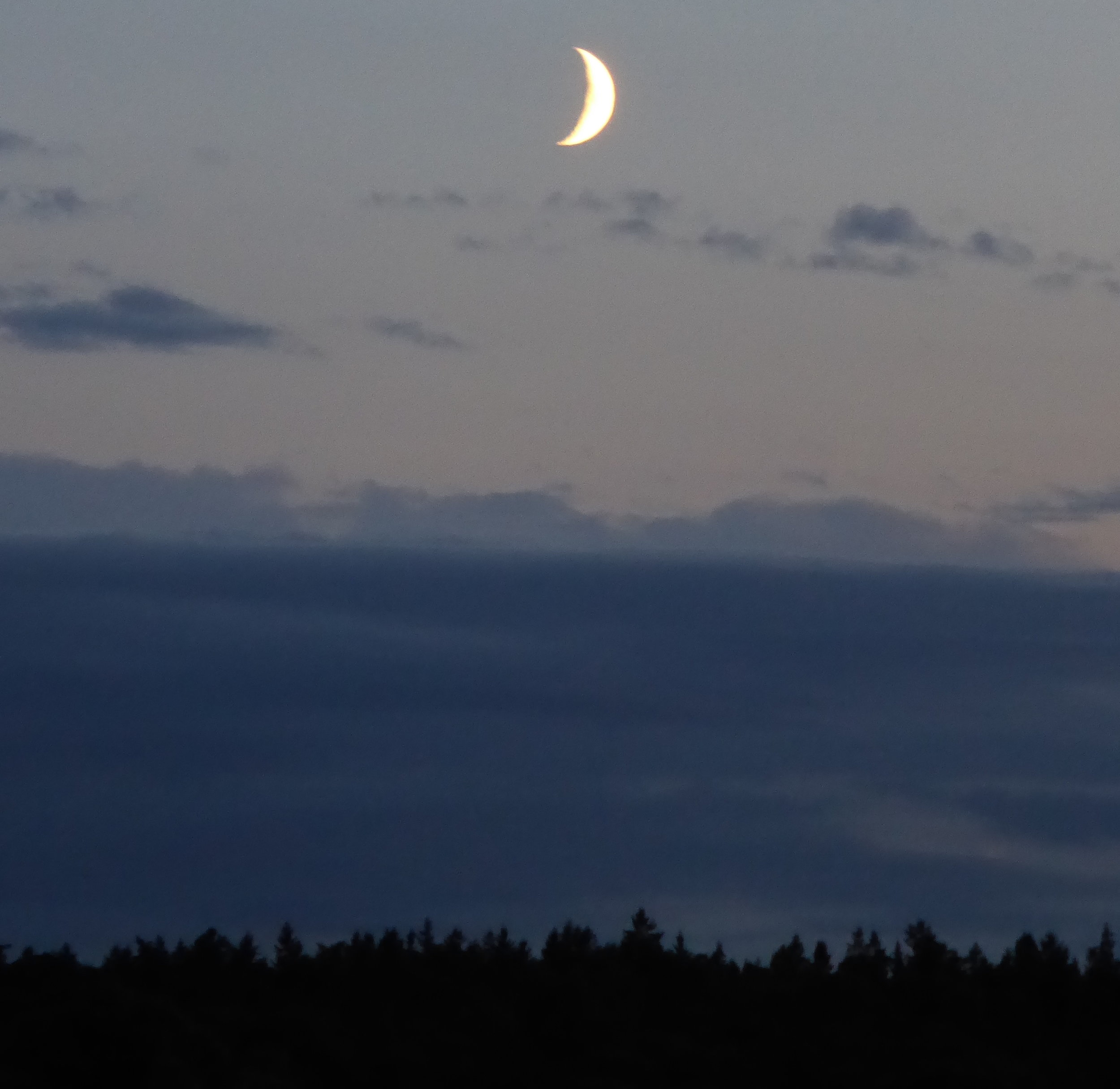 Måne över skog. Foto: Jenny Rosen, Djurgårdens Ekolyx.