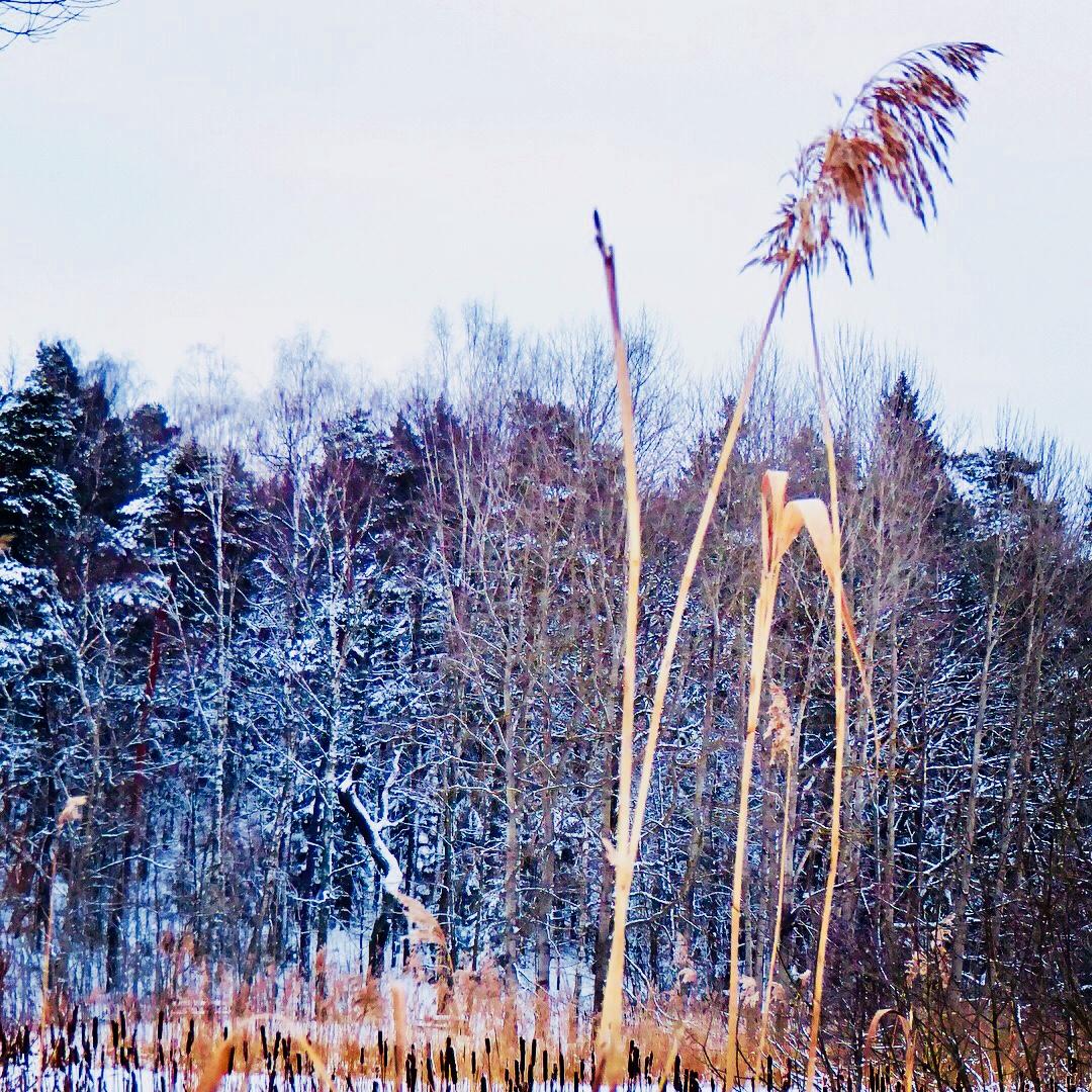Vinter på Djurgården. Foto: Jenny Rosen, Djurgårdens Ekolyx.