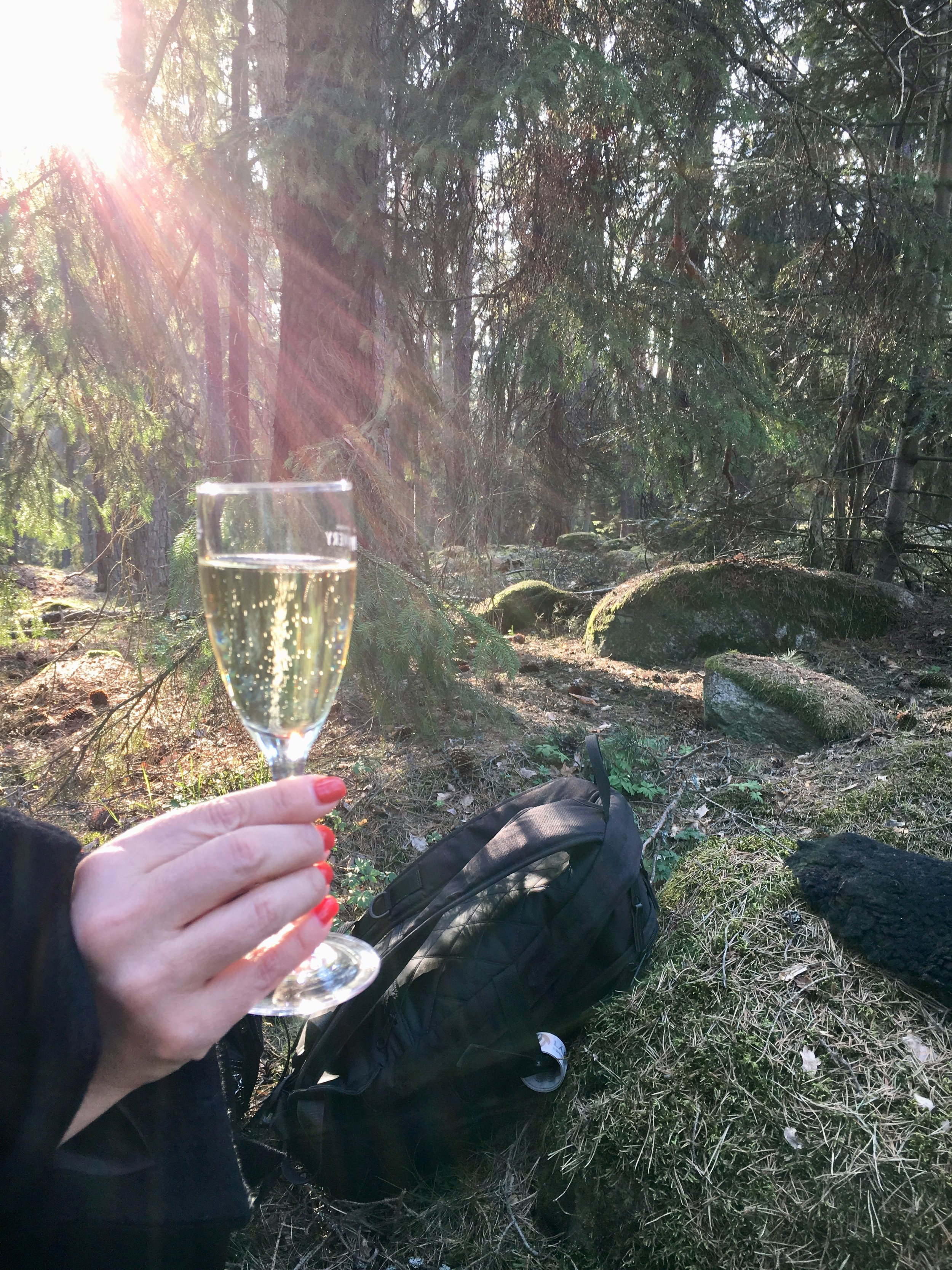 Bubbel i skogens kvällsljus. Foto: Jenny Rosen, Djurgårdens Ekolyx.