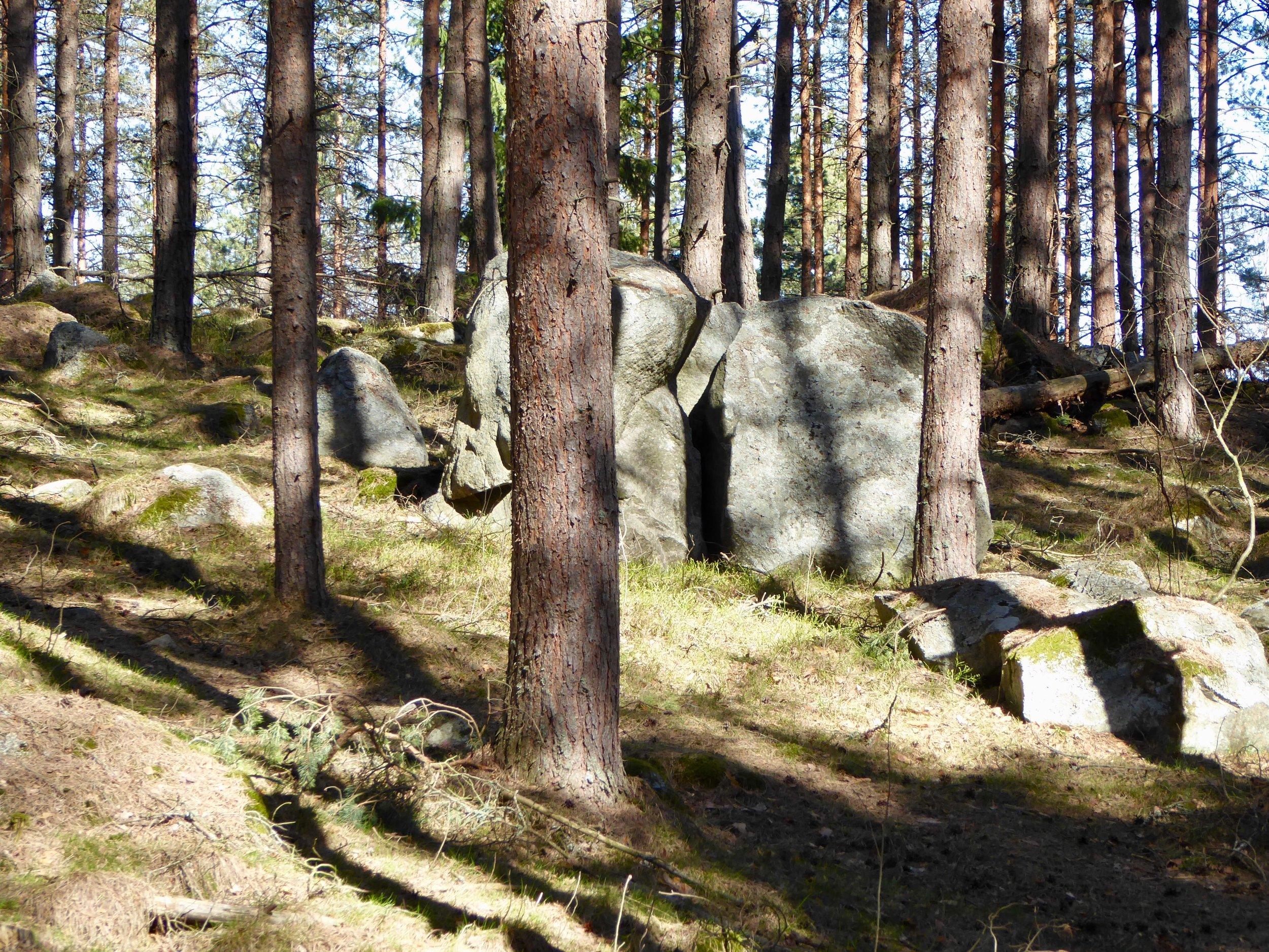 Trollskog. Foto: Jenny Rosen, Djurgårdens Ekolyx.