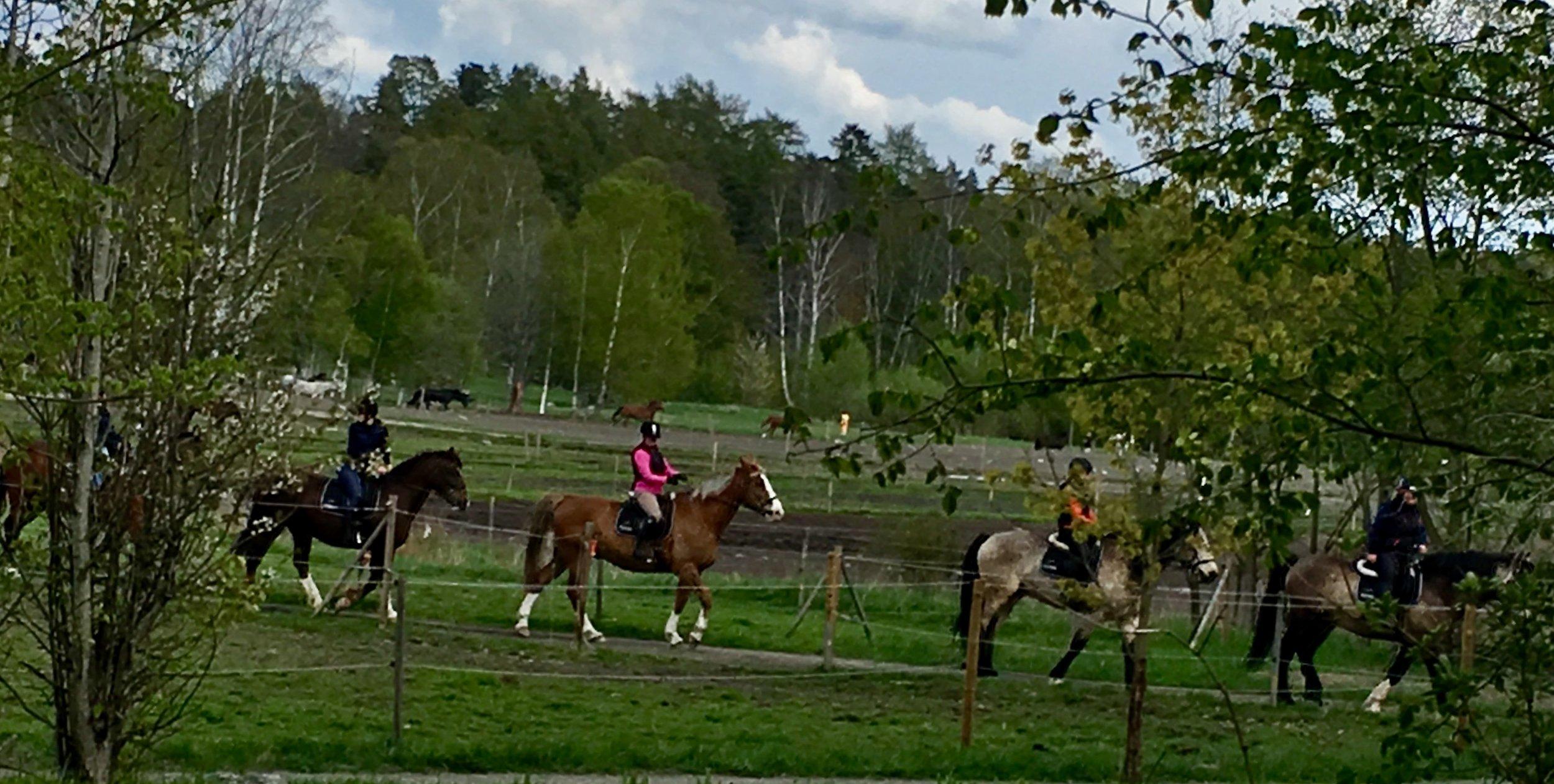 Ekoskådning till häst. Foto: Jenny Rosen, Djurgårdens Ekolyx.