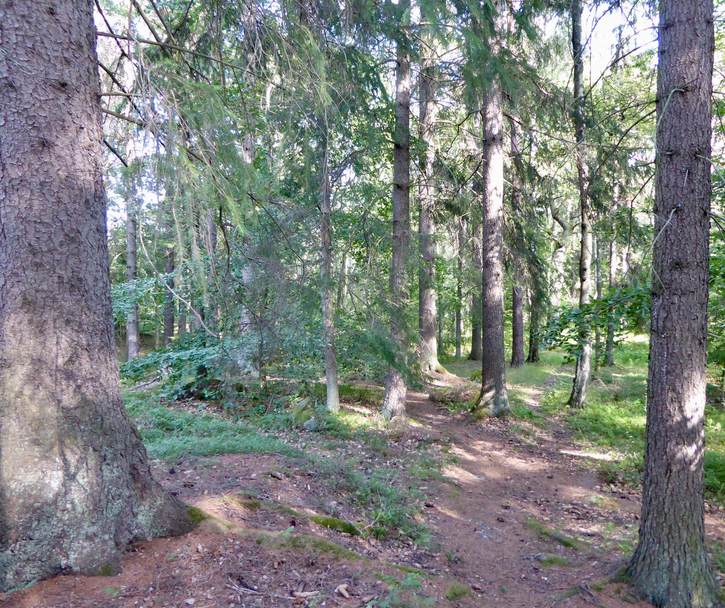 Mjuk fascination i Djurgårdsskogen. Foto: Jenny Rosen, Djurgårdens EKolyx.