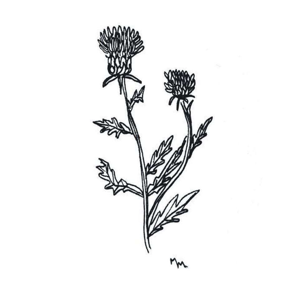 LARVA LAMP:  Botanical line drawing