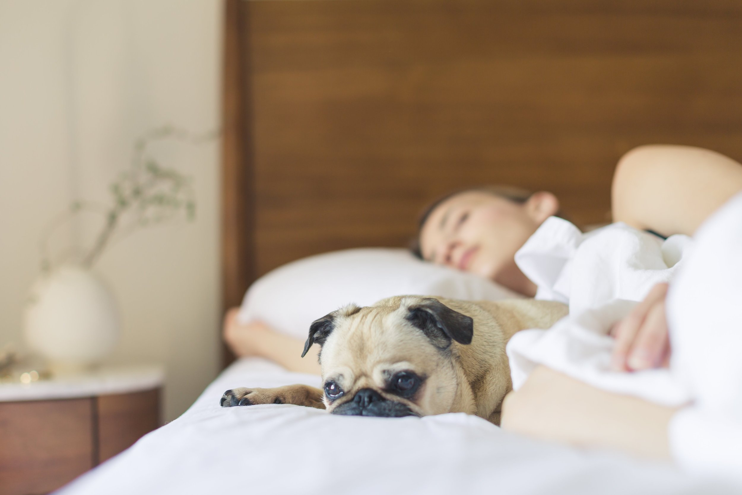 Dog Sleeping on bed with woman