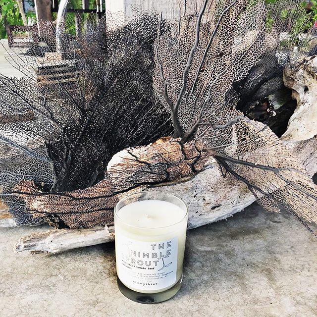 Among the beautiful fan coral in Tulum ✨🌴☀️🏝 #tulum #fancoral #ethicallymade #coconutwaxcandles #madeinjax  #jaxcreatives #wanderlust #travelcandle #igersjax #igersjaxbeach