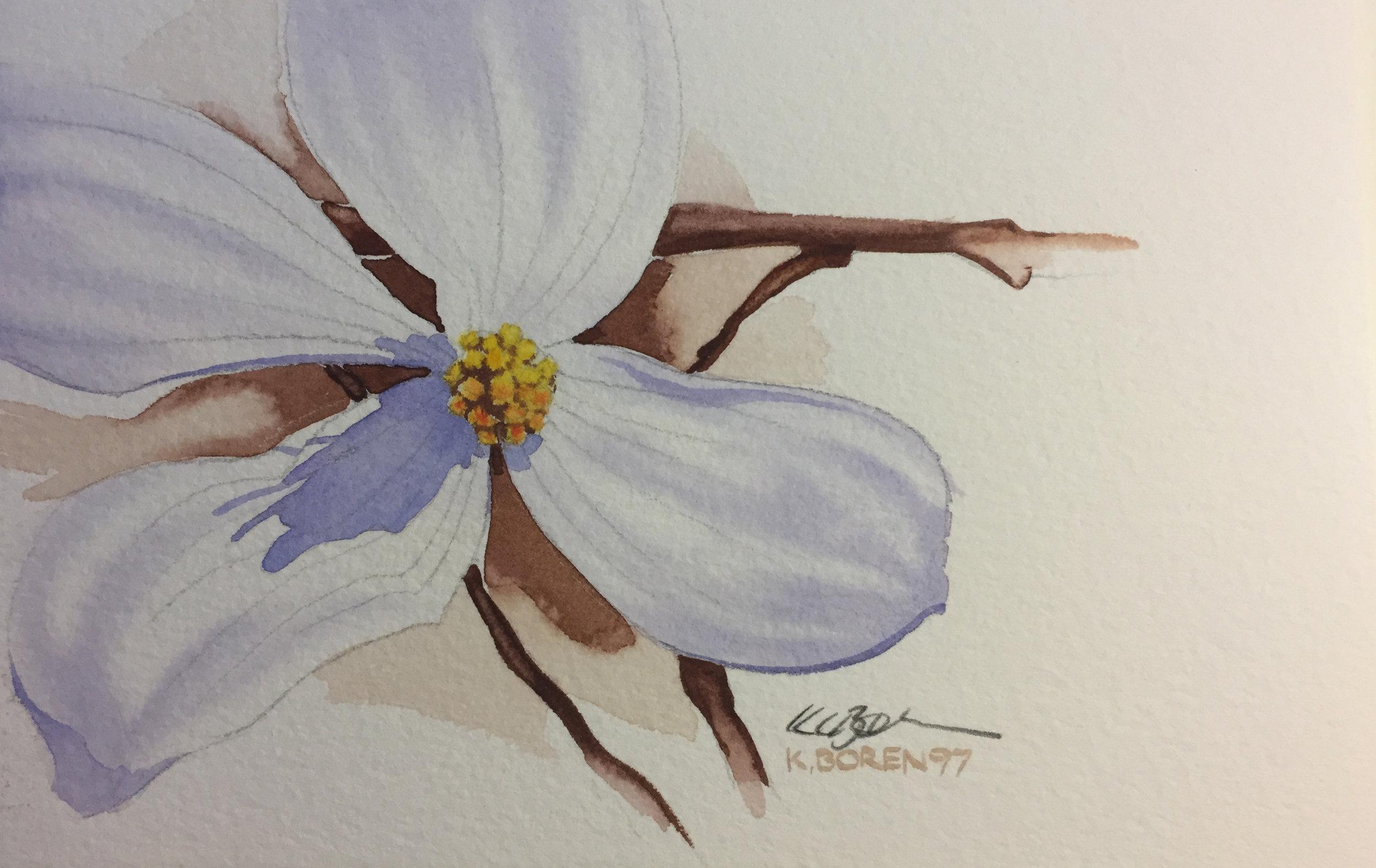 - spring dogwood bloom  7