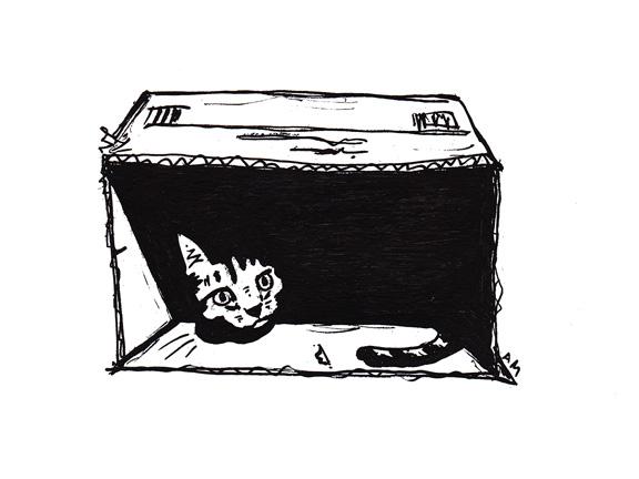 Cats #6 (Box)