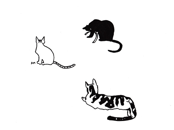 Cats #12
