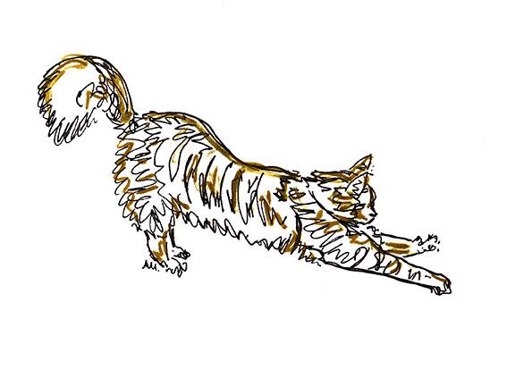 Golden Stretch_72.jpg