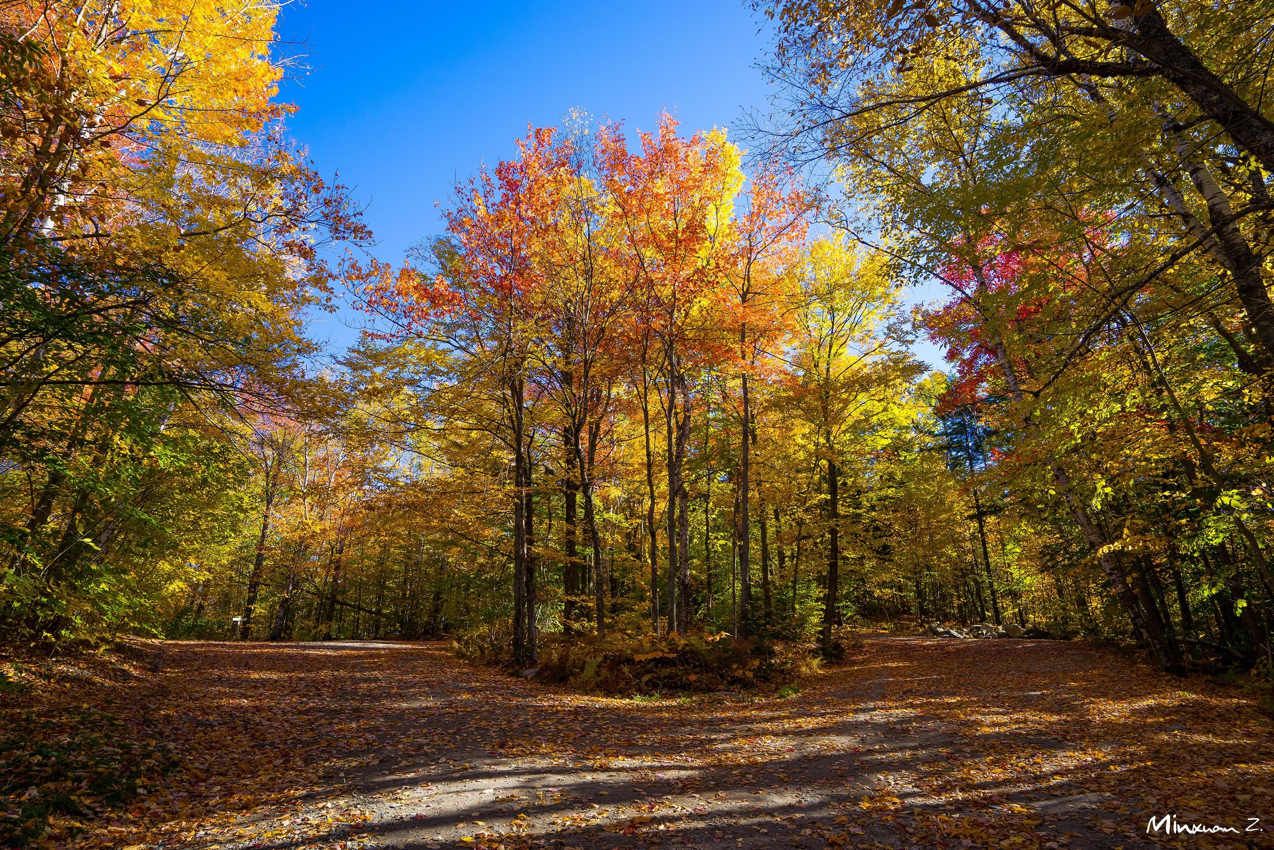 Fall Color in Vermont I