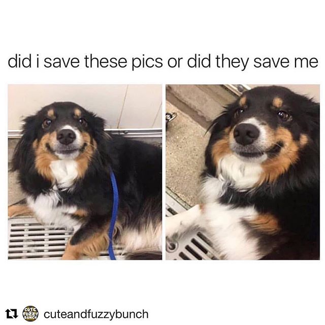 Ok how true is this though 😭🐶💖 ・・・ #Repost @cuteandfuzzybunch