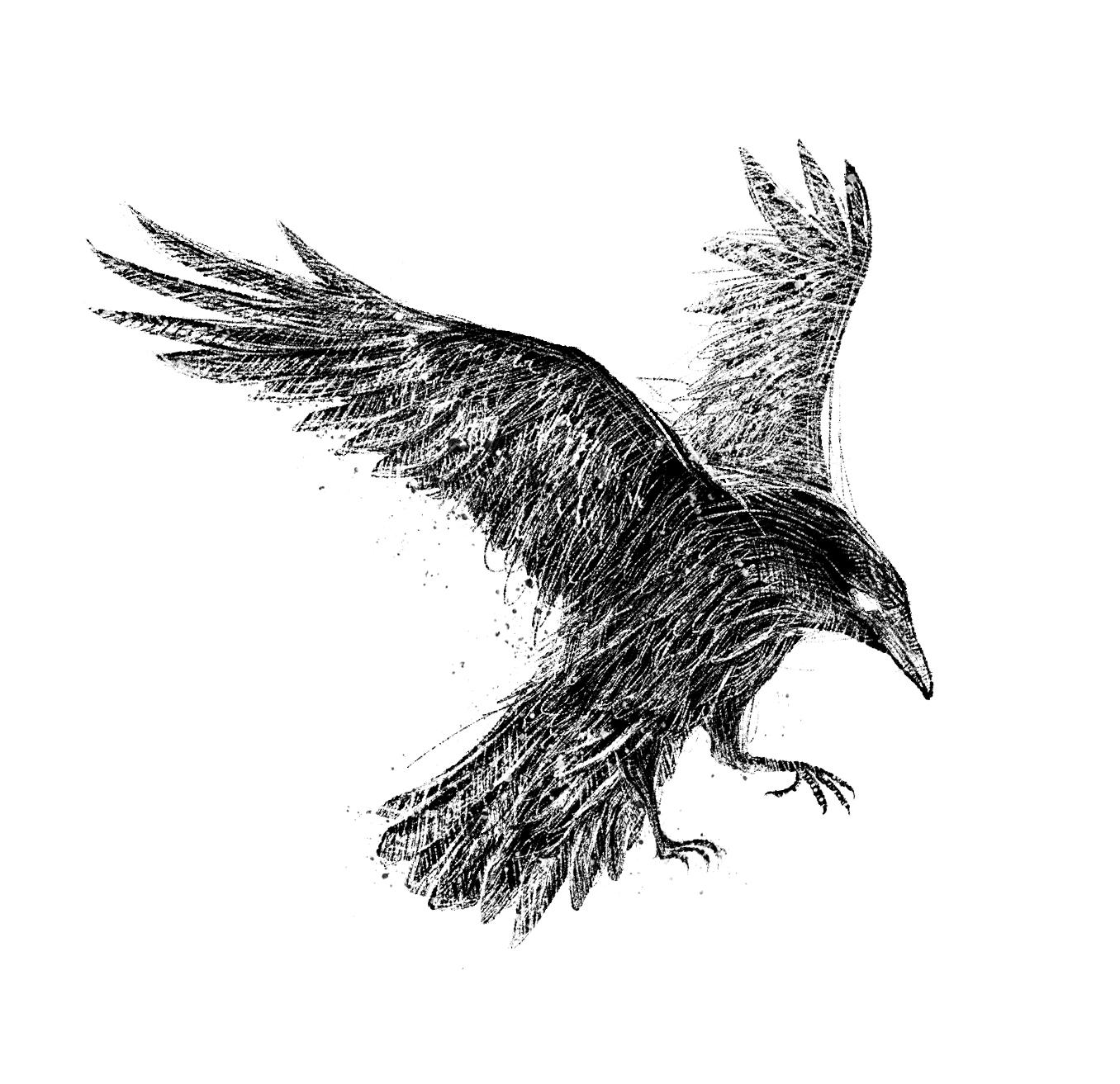 Raven (1).jpg