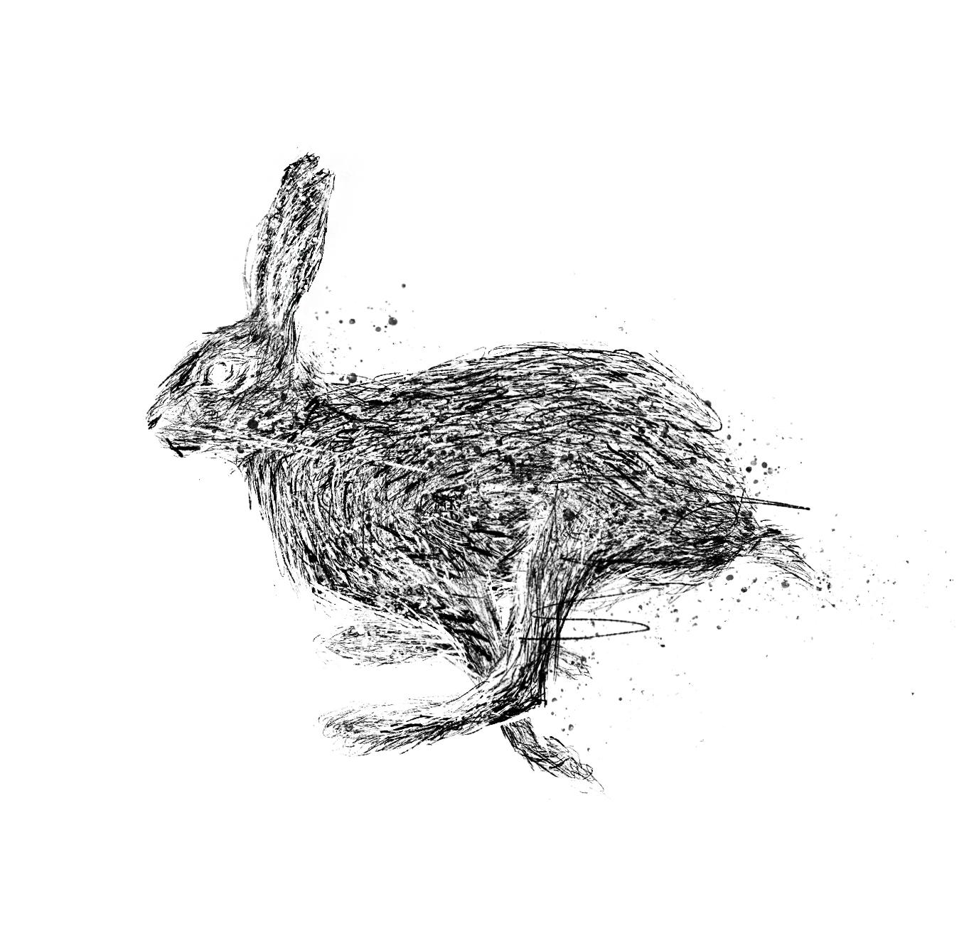Hare (1).jpg