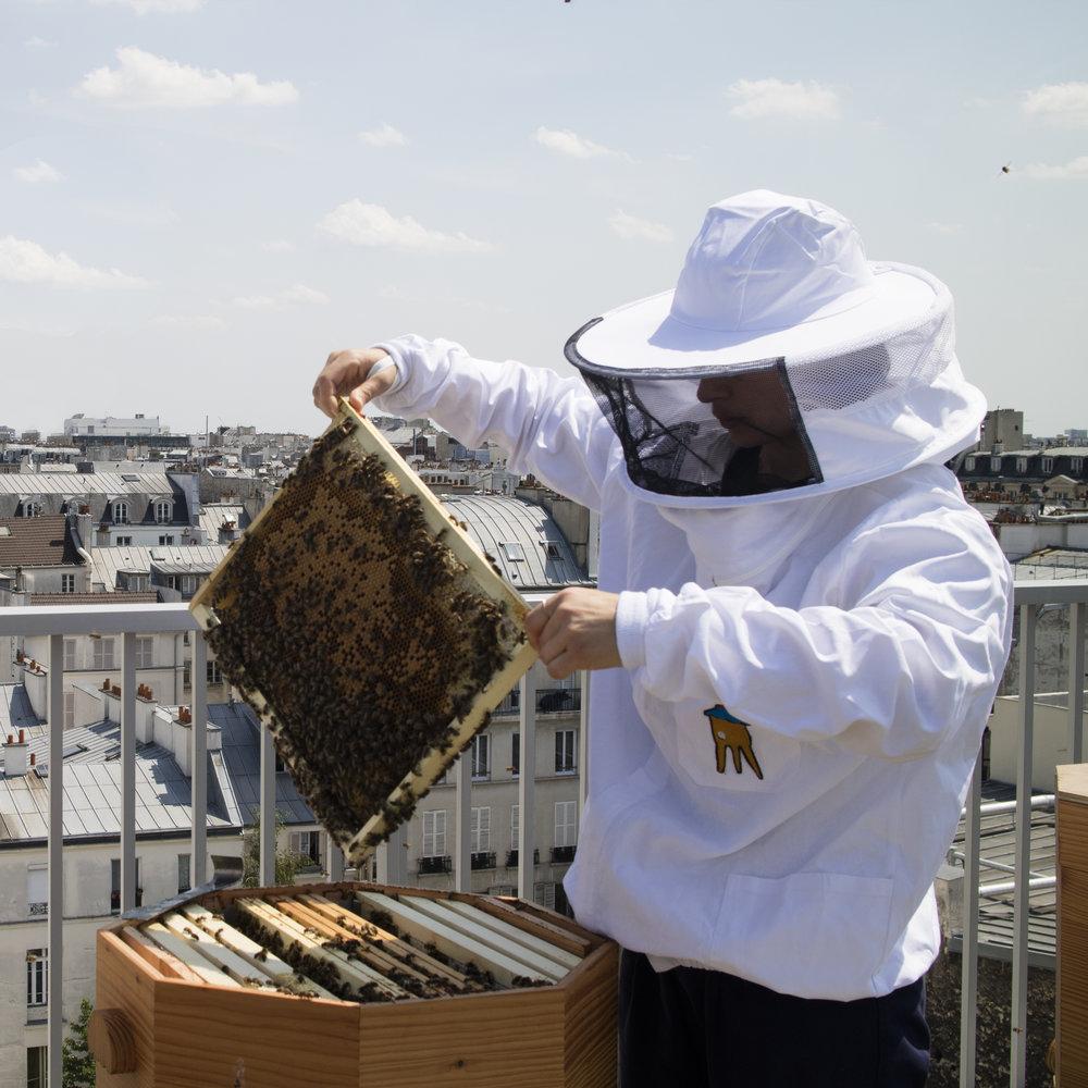 abeille3.jpg