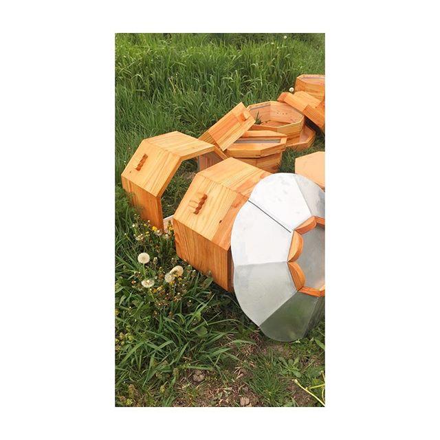 🥞🌿 . . . . . #ruche #beehive #bees #abeilles #rucheeustache #eustache #apiculture #🐝 #beekeeping #urbanbeekeeping #apicultureurbaine #rucher #miel #honeycomb #honey #🍯 #design #designer #productdesign #🔨 #🔧 #🔩 #menuiserie #bois #atelier #wood #woodworking #worskhop #limousin