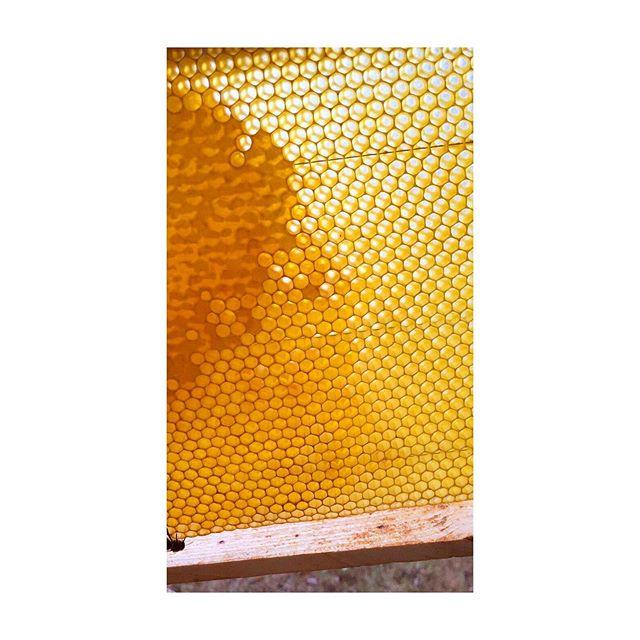 🐝/🍯/📐/📏/🏗 . . . . . . . #ruche #beehive #bees #abeilles #rucheeustache #eustache #🏰#apiculture #🐝 #beekeeping #urbanbeekeeping #apicultureurbaine #rucher #miel #honeycomb #honey #🍯 #design #designer #productdesign #🔨 #🔧 #🔩 #toit #rooftop #roof #view