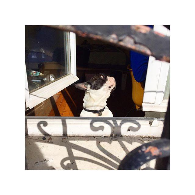 🙋🏻♂️👀🌞 Bye bye roomie 👋🏽 @timotheechalazonitis 💙
