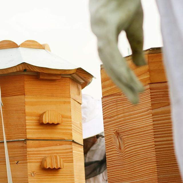 🌥🏰🐝👨🏻🚀 @anma.officiel  @mugo_paysage . . . . . . . . . . #ruche #beehive #bees #abeilles #rucheeustache #eustache #🏰#apiculture #🐝 #beekeeping #urbanbeekeeping #apicultureurbaine #rucher #miel #honeycomb #honey #🍯 #design #designer #productdesign #🔨 #🔧 #🔩 #toit #rooftop #roof #view #workshop #atelier #pedagogique