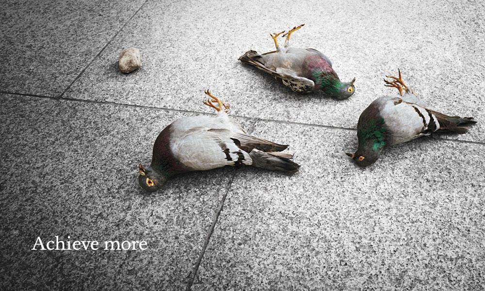 KBC_birds_1000.jpg