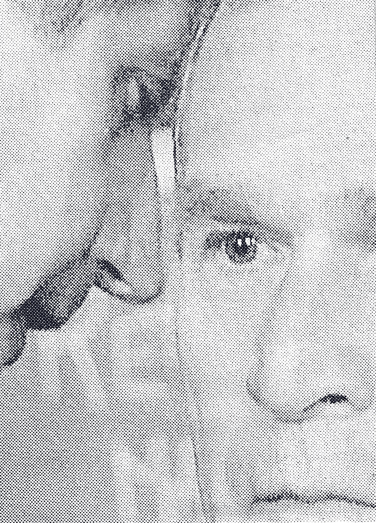 george duo.jpg