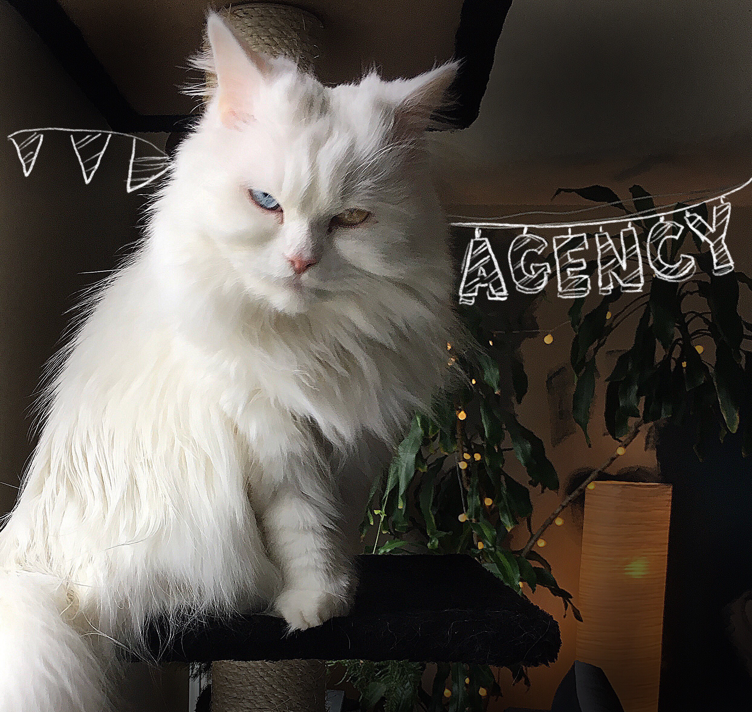 Agency   - Click on this kitty If you are an agency in need of a kickass copywriter...
