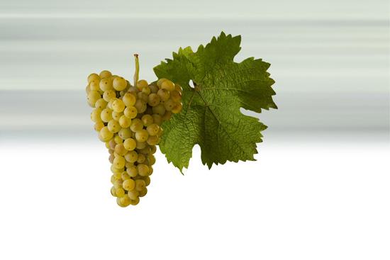 7% of total vineyard plantings