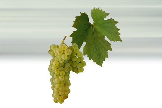 8.5% of total vineyard plantings