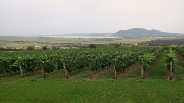 View from the Gotberg winery overlooking Palava hills