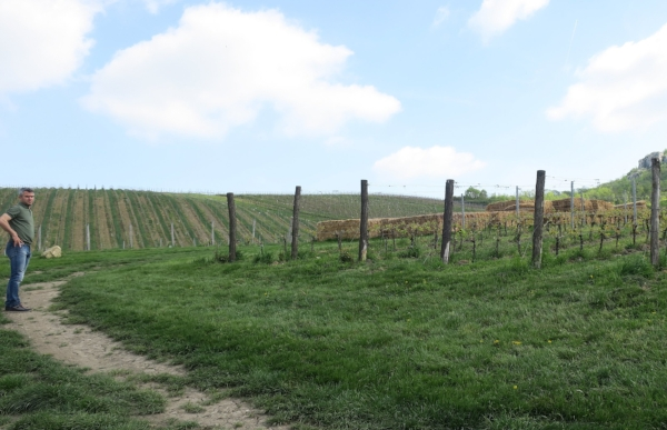 Jaromir showing us around the vineyards