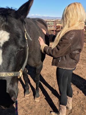 Equine Specialist for Equine-Assisted Therapy - A certified equine specialist may collaborate in equine-assisted therapy and learning sessions to provide horse-behavior expertise and support mounted work.