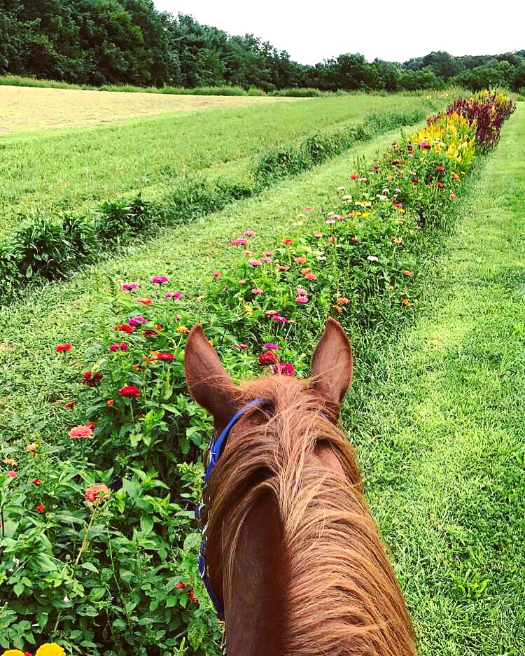 Horse Flowers