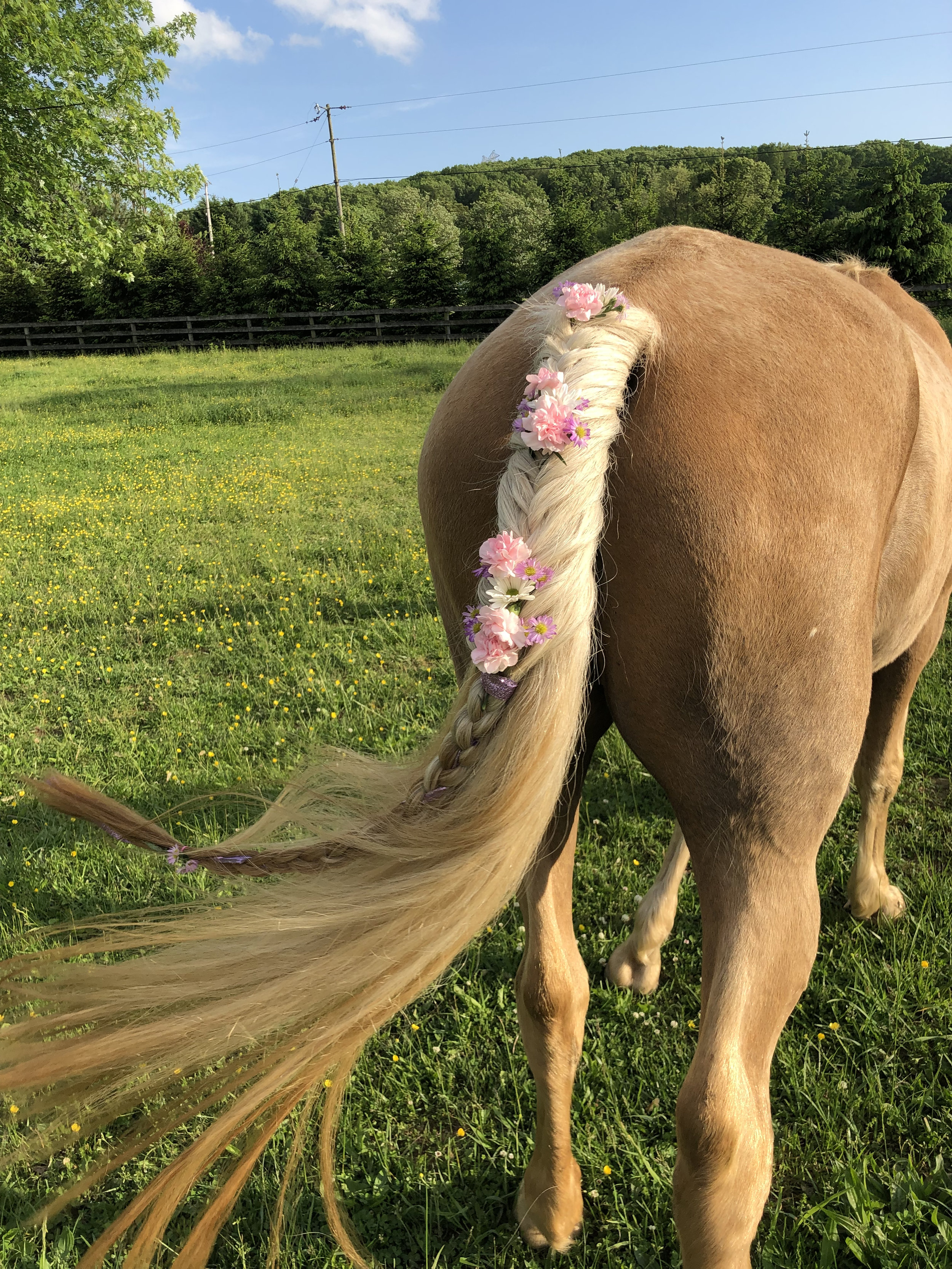 Braided Horse Tail with Flowers