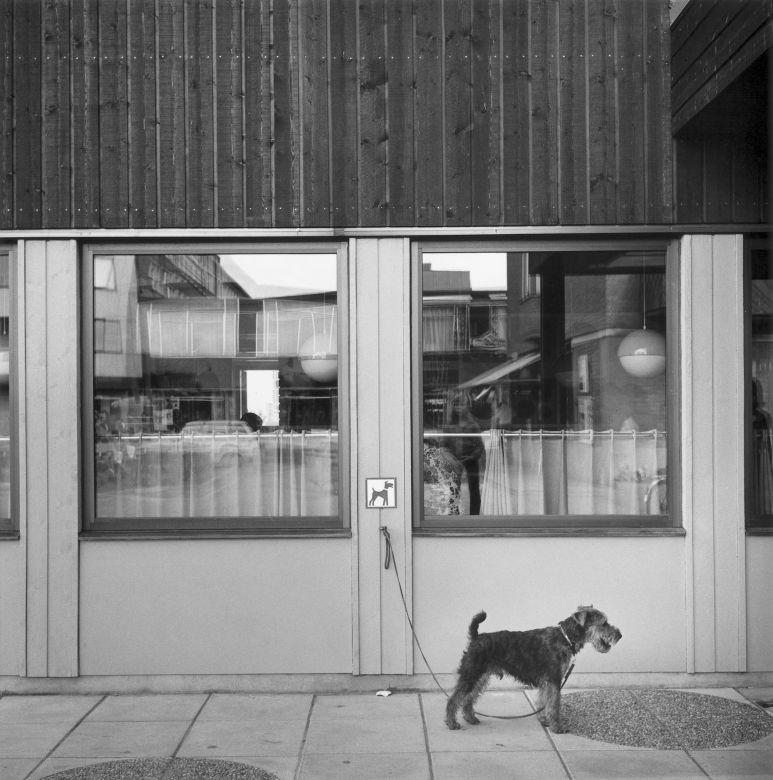 Gunnar smoliansky dog.jpg