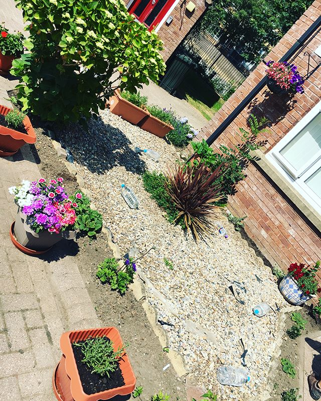 Gorgeous photos of Les' garden a number of weeks since his mini garden makeover and everything is blooming! What a beautiful splash of colour from everything flourishing! Les' garden may feature in the local media soon! Keep your eyes peeled 👀 #groweatthrive #elswickgardenneighbours #elswick #edibleelswick #lovewhereyoulive #WestEndNcl
