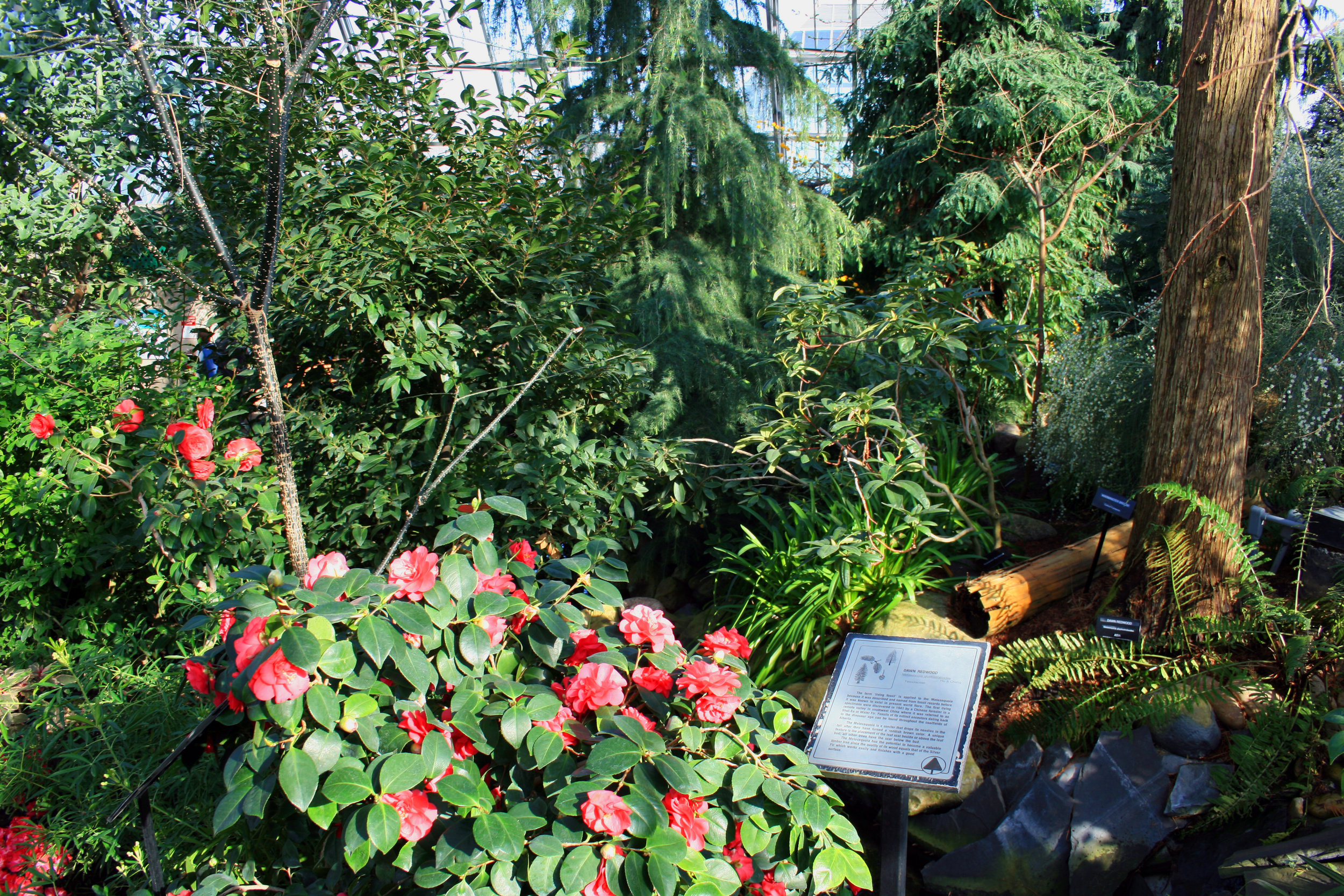 Inside_of_muttart_conservatory.jpg
