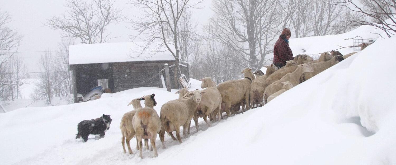 February - Lambing Season - Banner.jpg